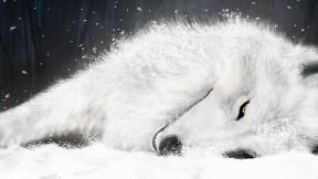 kurt,vahşi,kar,soyut