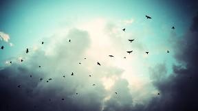kuş,bulut,gökyüzü