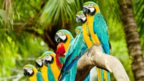 papağan,kuş,ağaç,doğa
