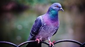 kuş,güvercin