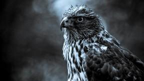 kartal,kuş