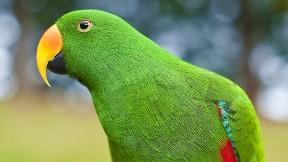 papağan,kuş