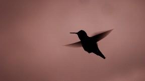 sinek kuşu,kuş,gece