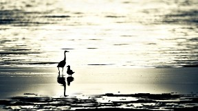kumsal,deniz,kuş