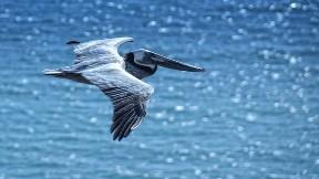 leylek,kuş,deniz