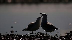 kuş,göl