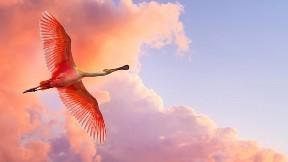 leylek,kuş,gökyüzü,bulut