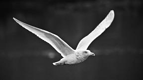 kuş, martı