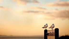 günbatımı,kuş,deniz,gökyüzü