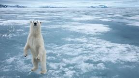kutup ayısı,buz,ayı,hayvan