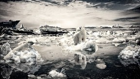 ayı,hayvan,deniz,buz,kutup ayısı