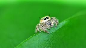örümcek,böcek,yaprak