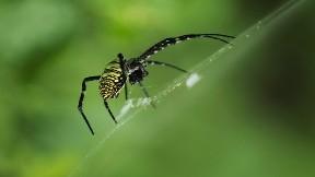 örümcek,hayvan,böcek