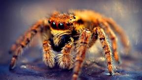 örümcek,böcek