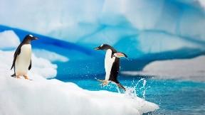 penguen, hayvan, kuş, deniz, kar