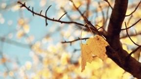 ağaç,yaprak