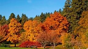 ağaç,park,gökyüzü,doğa,güneş
