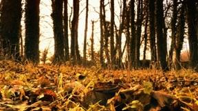 yaprak,sonbahar,ağaç