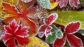 sonbahar,yaprak,buz