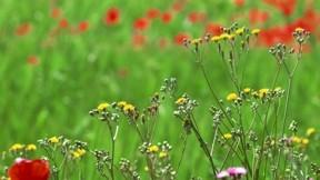çiçek,çimen