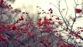 sonbahar,çalı,gökyüzü,meyve