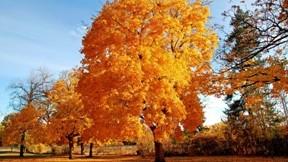 sonbahar,güneş,ağaç,doğa,gökyüzü