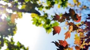 ağaç,dal,güneş,gökyüzü,yaprak,sonbahar