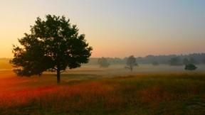 sonbahar,günbatımı,manzara,gökyüzü,doğa