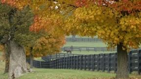 sonbahar,at,ağaç,doğa,çimen