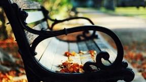 sonbahar,yaprak,park,güneş