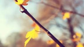 yaprak,sonbahar,güneş,dal