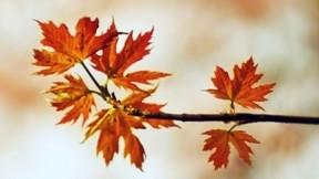 yaprak,sonbahar,dal