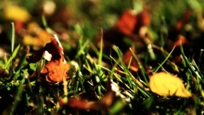 sonbahar,çimen,yaprak