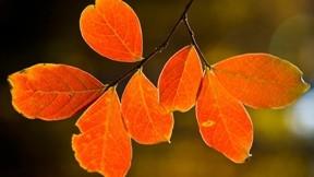 yaprak,sonbahar