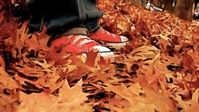 yaprak,ayakkabı,ağaç