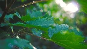 yağmur,yaz,yaprak,güneş