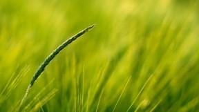 yaz,ot,doğa,çimen