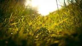 yaz,çimen,güneş,gökyüzü