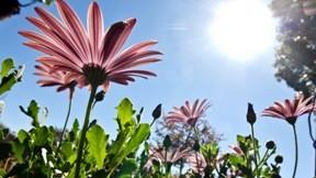 çiçek,yaz,güneş,gökyüzü