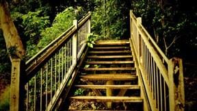 yaz,merdiven,ağa,orman,doğa
