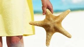 deniz yıldızı,kumsal