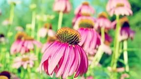 çiçek,güneş,doğa