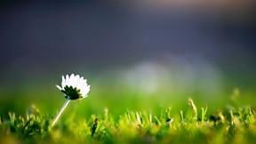 çimen,yaz,güneş,papatya,çiçek