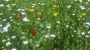 yaz,çiçek,çimen