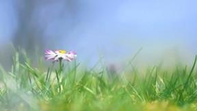 çiçek,yaz,çimen,güneş,makro