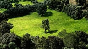 yaz,orman,güneş,ağaç
