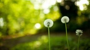çiçek,yaz,makro