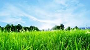 yaz,güneş,çimen,ağaç,gökyüzü