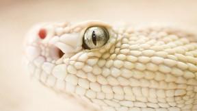 yılan,hayvan