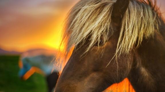 Günbatımı Atlar
